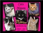 Cats Haven Calendars!!