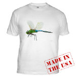 Dragonfly 3 - Apparel