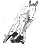 Full Blast, paint foal