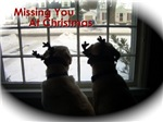 Christmas Labs - Missiing You