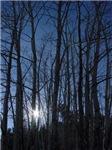 Aspen Light (Estes Park, CO)