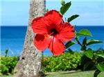 Red Hibiscus (Maui, HI)