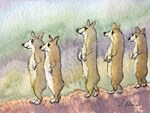 Corgi dogs having a meerkat moment
