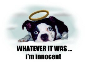 WHATEVER IT WAS ... i'm innocent (2 cute)