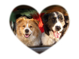 DOGS IN A HEART