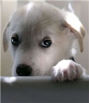 sad dog look