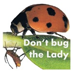 Don't bug the Lady