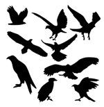 Black Eagles Silhouette