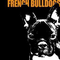 French Bulldog Stuff