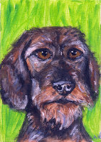 WIRE HAIRED DACHSHUND ITEMS
