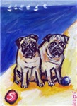PUGS at the beach