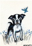 Boston Terrier pup butterfly