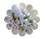 Whimsical White Flowers
