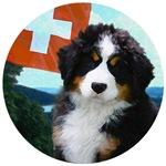 Swiss Berner Puppy