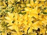Yellow's Delight, Photo Artwork