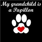 Papillon Grandchild