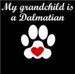 Dalmatian Grandchild