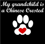 Chinese Crested Grandchild
