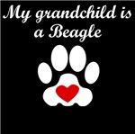 Beagle Grandchild