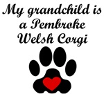 Pembroke Welsh Corgi Grandchild