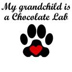 Chocolate Lab Grandchild