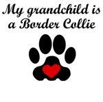 Border Collie Grandchild