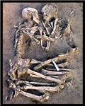 Necromance Skeleton Romance Goth Dark Art