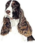 Elegant English Springer Spaniel Products & Gifts