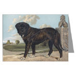 Antique Mastiff Note Cards and Post Cards