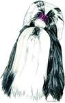 Black & White Shih Tzu Portrait Style