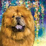 Chow Chow Painting