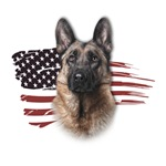 Patriotic German Shepherd