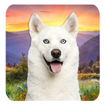 White Husky Meadow