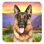 German Shepherd Meadow