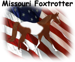 Pinto Missouri Foxtrotter with the American Flag!