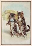 Cats, Parasol