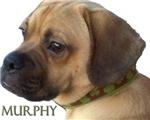 Murphy Puggle's Aisle