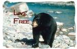 Live Free - Black Bear