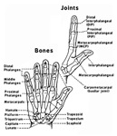Hand Anatomey