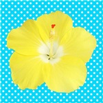 Yellow Hibiscus on Teal