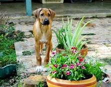 YEAR OF THE DOG! SEASONAL FAVORITES