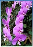 Purple orchid, floral photo,