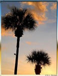 Palm tree, colorful sunset