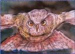 Night Owl! Nature art!