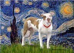 STARRY NIGHT<br> & Pit Bull