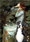 OPHELIA (SEATED)<br>Greater Swiss Mountain Dog