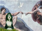 CREATION OF MAN<br>& Bearded Collie (slate)