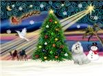CHRISTMAS MAGIC<br>& Maltese