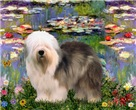 LILY POND<br>& Old English Sheepdog