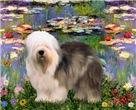 LILY POND<br>& Old English Sheepdog